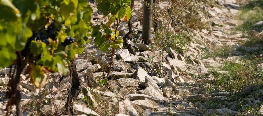 Les Vins du Domaine La Bastide RougePeyre