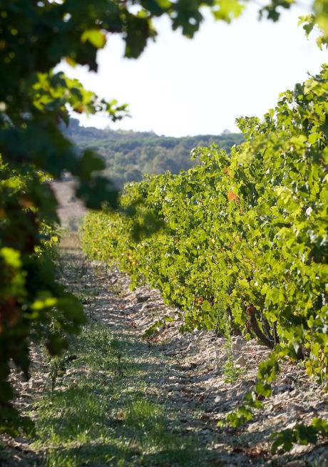 Le vignoble de la Bastide RougePeyre